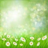 Daisy vector achtergrond de zomerontwerp stock illustratie