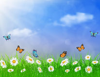 Daisy vector background summer design Stock Images