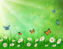 Daisy vector background summer design. Daisy vector background  summer design flower green garden nature illustration. Spring background  with grass and Stock Image