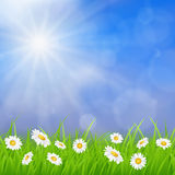 Daisy vector background summer design. Flower green garden nature illustration. Spring background with grass, daisies and bokeh lights Royalty Free Stock Photography