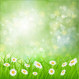 Daisy vector background summer design. Flower green garden nature illustration. Spring background with grass, daisies and bokeh lights Stock Images
