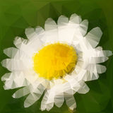 Daisy vector illustration Stock Images