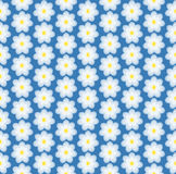 Daisy vector illustrator. Floral pattern simless. White daisies on a blue background. Seamless pattern Royalty Free Stock Image