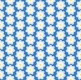 Daisy vector illustrator Royalty Free Stock Image