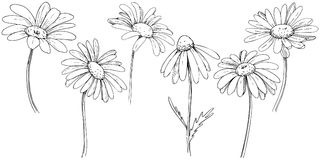 Daisy in a vector style isolated. stock illustration