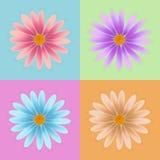 Daisy vector van het bloem de vector, kleurrijke madeliefje, bloemvector Royalty-vrije Stock Foto