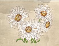 a daisy with vintage background, artistic postcards Stock Images