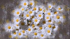 Daisy stock photography