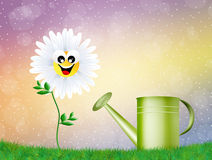 Daisy and watering can Royalty Free Stock Photography