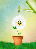 Daisy and watering can Royalty Free Stock Image