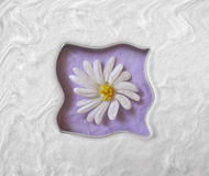 Daisy Wave Royalty Free Stock Photo