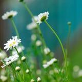 Daisy wheel Stock Images