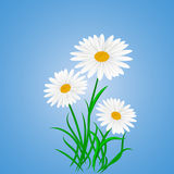 Daisy wheels on blue background Stock Image