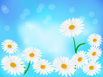 Daisy wheels on blue background Stock Images
