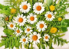 Daisy wheels and union and leaves and flowers and Royalty Free Stock Image