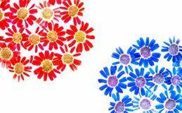 daisy wiosna Obraz Stock