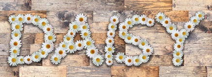 Daisy Wood Background. Name made from real daisy flowers on wood background Stock Photography