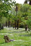 Daisy woods in fota wildlife park. Near cobh county cork ireland Stock Photo