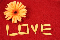 Daisy and the word love Royalty Free Stock Image