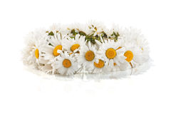 Daisy wreath on a white Stock Image