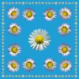 DaisyNapkinBlue1 Royalty-vrije Stock Foto's