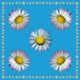 DaisyNapkinBlue2 Stock Afbeeldingen