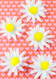 Daisys and hearts Royalty Free Stock Photos