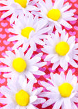 Daisys and hearts Stock Images