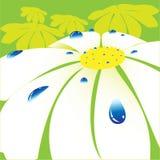 Daisywheel Stock Image