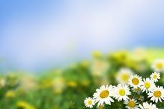 daisywheel obrazy royalty free