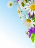 daisywheels obraz stock