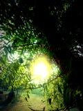 Daje ja niektóre światłu słonecznemu Obraz Royalty Free