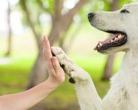 Daje ja pięć przeciw kobiety ręce - Psi odciskanie jego łapa obraz stock