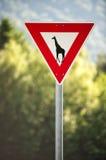 Daje sposobowi żyrafa znak, drogowi znaki, humor Zdjęcia Stock