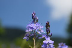 Dajti Mountain Wild flowers, Albania Royalty Free Stock Photo