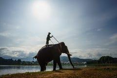 Dak Lak,越南- 2017年10月22日:从Lak湖的大象饮用水在Dak Lak,越南的高原中心 图库摄影