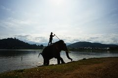 Dak Lak,越南- 2017年10月22日:从Lak湖的大象饮用水在Dak Lak,越南的高原中心 免版税库存图片