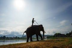 Dak Lak,越南- 2017年10月22日:从Lak湖的大象饮用水在Dak Lak,越南的高原中心 免版税图库摄影