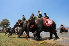 Dak Lak,越南- 2017年3月12日:在赛跑的节日的大象由Lak湖在Dak Lak,越南的中心高地 图库摄影