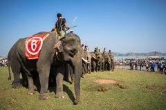 Dak Lak,越南- 2017年3月12日:大象站在队中在种族面前在赛跑的节日由Lak湖在Dak Lak,中心hig 库存照片
