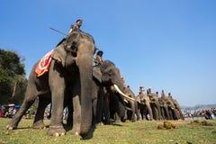 Dak Lak,越南- 2017年3月12日:大象站在队中在种族面前在赛跑的节日由Lak湖在Dak Lak,中心hig 图库摄影