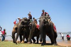 Dak Lak, Vietnam - 12 de marzo de 2017: Elefantes en el festival que compite con por el lago lak en Dak Lak, montaña de centro de Foto de archivo libre de regalías