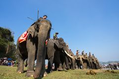 Dak Lak , Vietnam - March 12, 2017 : Elephants stand in line before the race at racing festival by Lak lake in Dak Lak, center hig Royalty Free Stock Image