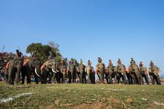 Dak Lak , Vietnam - March 12, 2017 : Elephants stand in line before the race at racing festival by Lak lake in Dak Lak, center hig Royalty Free Stock Photo