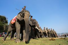 Dak Lak , Vietnam - March 12, 2017 : Elephants stand in line before the race at racing festival by Lak lake in Dak Lak, center hig Stock Photography