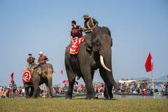 Dak Lak, Vietnam - 12 marzo 2017: Festival di corsa dell'elefante dal lago lak in Dak Lak, altopiano concentrare del Vietnam Immagini Stock Libere da Diritti