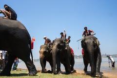 Dak Lak, Vietname - 12 de março de 2017: Elefantes no festival de competência pelo lago lak em Dak Lak, montanhas center de Vietn Imagens de Stock Royalty Free