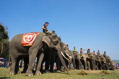 Dak Lak, Vietname - 12 de março de 2017: Os elefantes estão na linha antes da raça no festival de competência pelo lago lak em Da Fotos de Stock