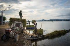 Dak Lak Wietnam, Oct, - 22, 2016: Rolnicy są ładowniczymi zbierającymi ryż od spławowej łodzi do przewiezionego pojazdu w Lak okr Fotografia Royalty Free