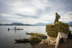 Dak Lak Wietnam, Oct, - 22, 2016: Rolnicy są ładowniczymi zbierającymi ryż od spławowej łodzi do przewiezionego pojazdu w Lak okr Fotografia Stock